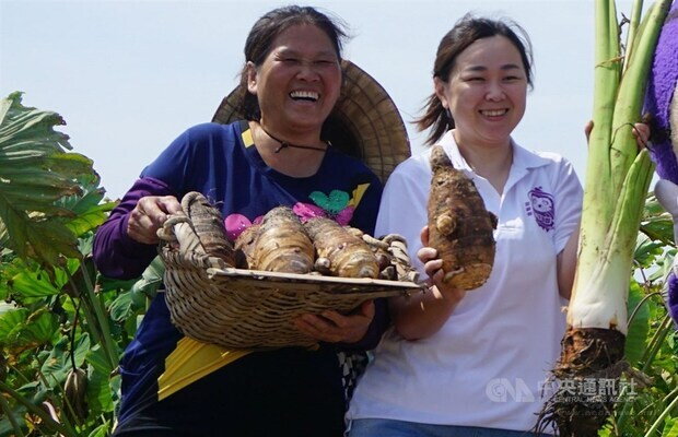 Kinmen township to celebrate taro harvest over National Day holiday