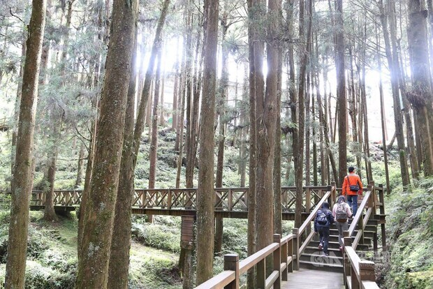 Half price entry to forest recreational areas offered during holiday