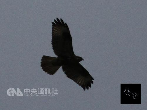 41 species of birds identified in 3-hour competition in Hualien forests